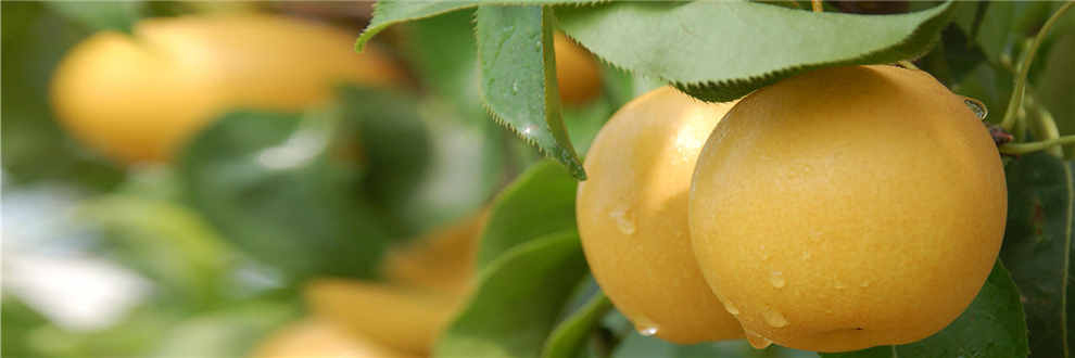 水果手工制作图片幼儿粘土菠萝